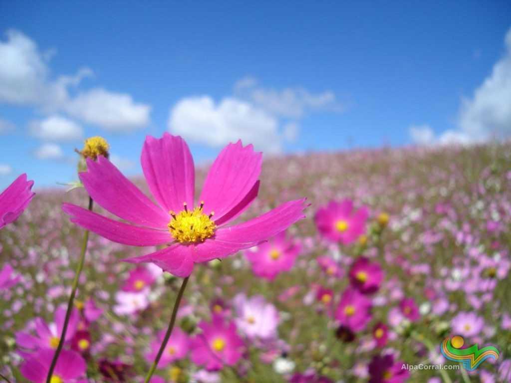Las Lagunitas Alpa Corral Cordoba Campo de Flores