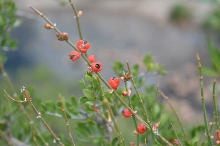 Alpa Corral flores naranjas