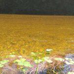 Fotos Alpa Corral Agua Cristalina