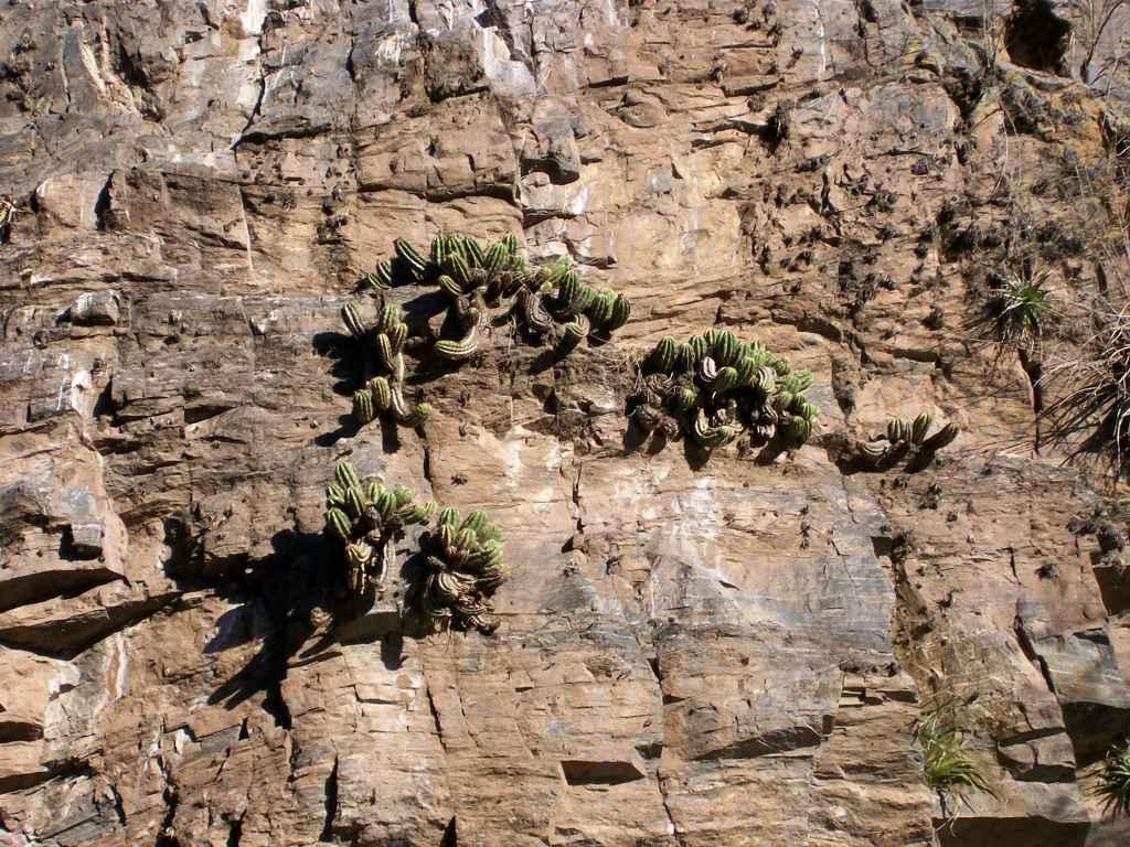 Alpa Corral cajones captus sobre las rocas